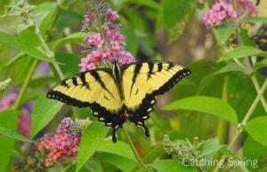 5 Easy Steps to Create a Pollinator Garden